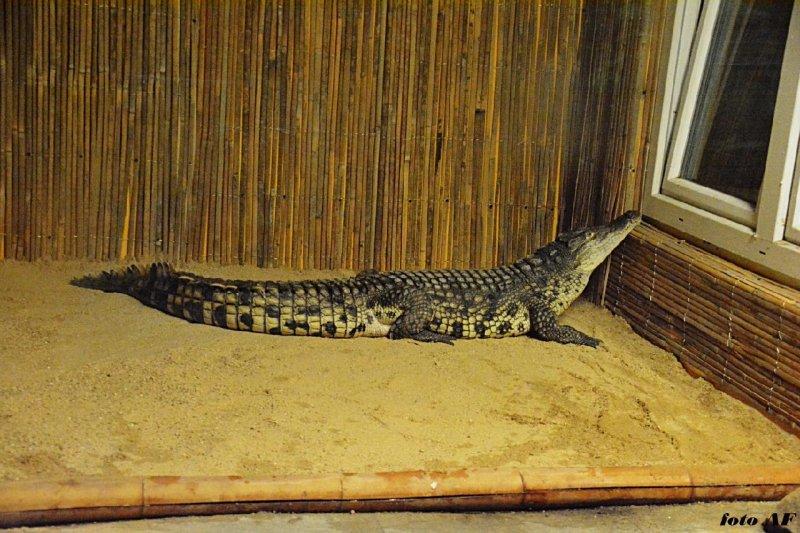 Největší plazi v zoo