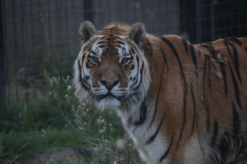 Tygr Dolar má 18. narozeniny