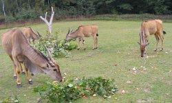 Ilustrační fotografie k článku Antilopa losí