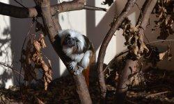 Ilustrační fotografie k článku Nejmenší primáti světa