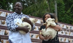 Ilustrační fotografie k článku Křtiny bílých lvíčat
