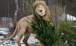 Ilustrační fotografie k článku Stromy pro zvířata.