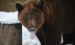 Ilustrační fotografie k článku Medvědí narozeniny