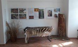 Ilustrační fotografie k článku Putovní výstava Afrika-země protikladů